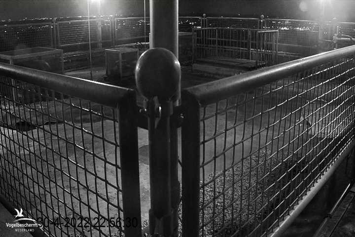 Webcam Peregrine in De Mortel - cam 1